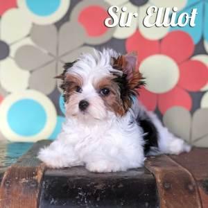 Elliot Biewer Puppy