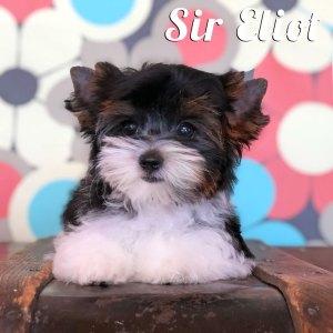 Eliot Biewer Puppy
