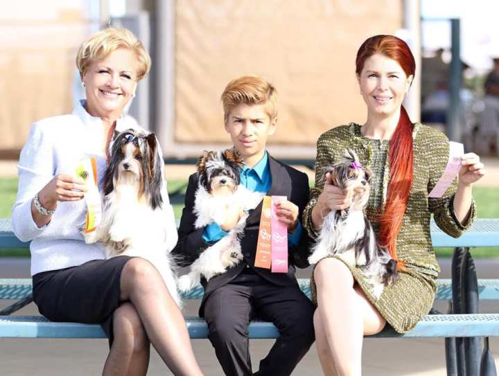 Rocky Mountain Biewer Terriers AKC Show Grand Junction