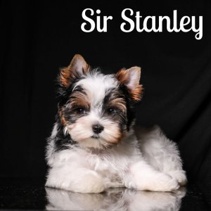Stanley Biewer Puppy
