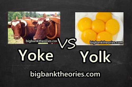 Yoke Vs Yolk