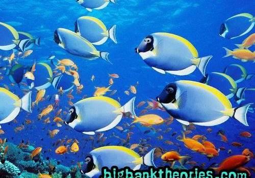 Vocabulary Nama Nama Ikan