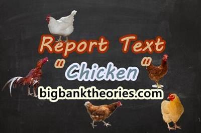 Contoh Report Text Pendek Tentang Ayam Dan Artinya