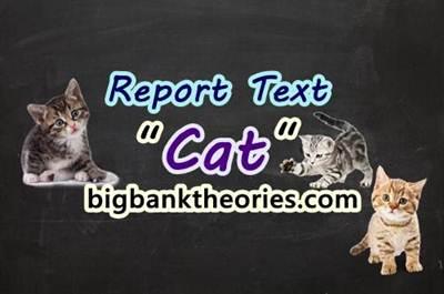 Report Text Bahasa Inggris Tentang Kucing