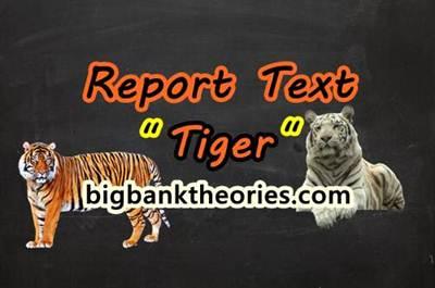 Report Text Bahasa Inggris Tentang Harimau