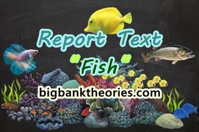 Report Text Bahasa Inggris Tentang Ikan