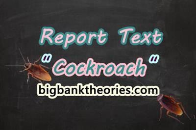 Report Text Bahasa Inggris Tentang Kecoa