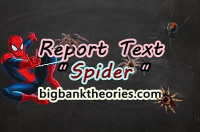 Report Text Bahasa Inggris Tentang Laba Laba