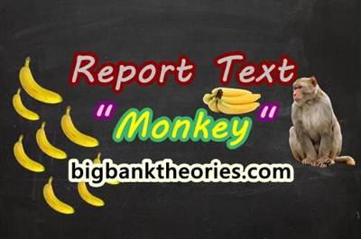 Report Text Bahasa Inggris Tentang Monyet