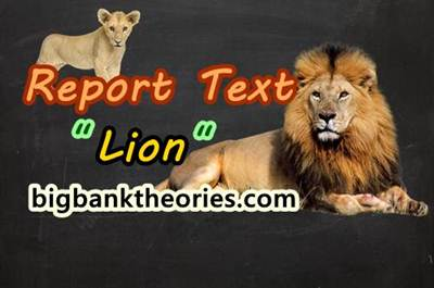 Report Text Bahasa Inggris Tentang Singa