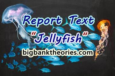 Report Text Bahasa Inggris Tentang Ubur Ubur