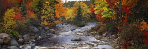 panoramic-images-stream-with-trees-in-a-forest-in-autumn-nova-scotia-canada