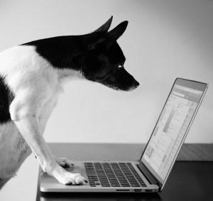 Cute dog on computer