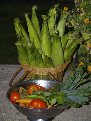 Starting an organic garden feed your soil for Harvest organic soil