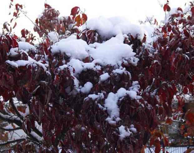 cornejo cubierto por snow_halloween snowstorm 2011