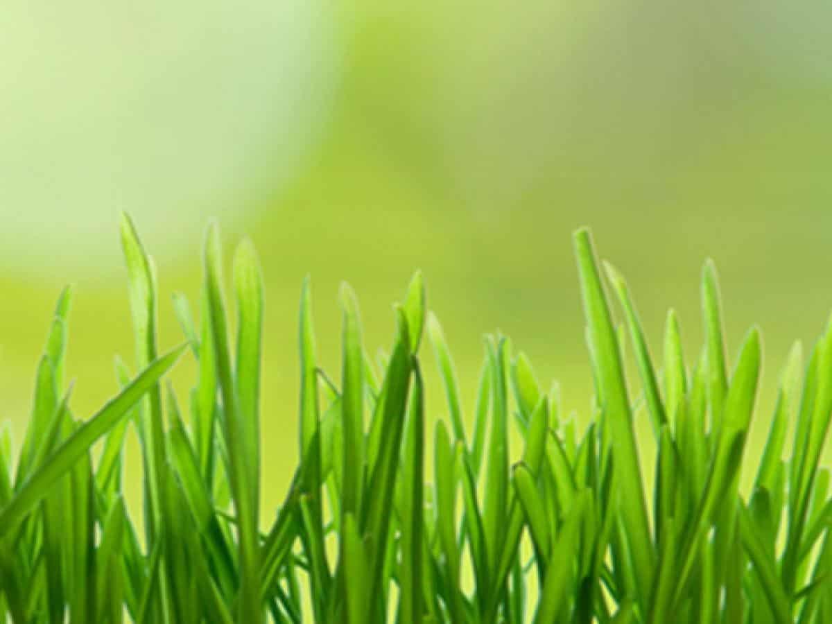 cuidado de primavera orgánico