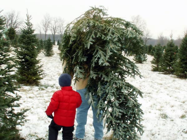 Tips For Buying A Fresh Cut Christmas Tree ⋆ Big Blog Of
