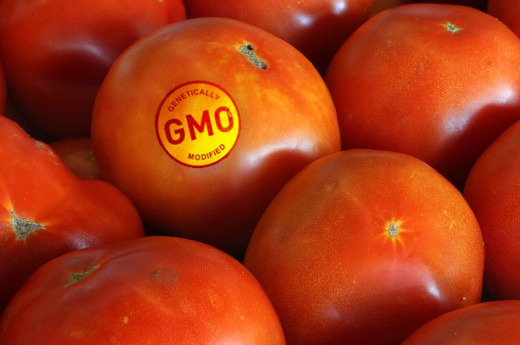 gmo  official definition  surprise  big blog List Of Gmo Tomatoes
