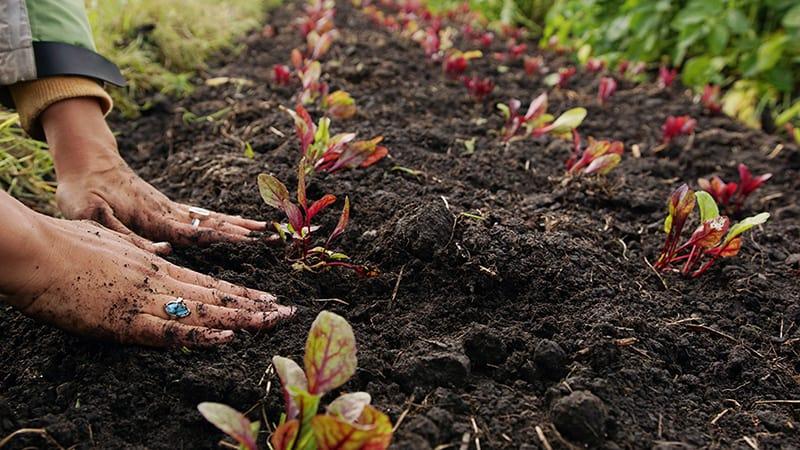 What is organic soil big blog of gardening - Nature s care organic garden soil ...
