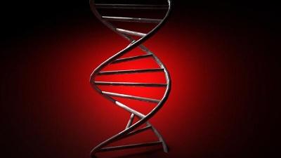 DNA-genes-genetics-jpg_20151013224313-159532