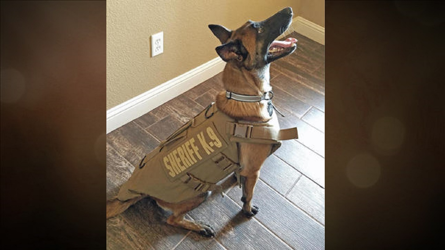 Tom Green County Sheriff K9 receives armor