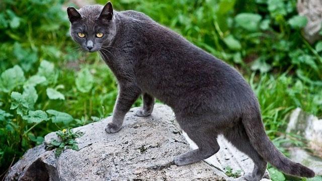 Cats - Tail flicking_20401398_22694297_ver1.0_640_360_1534253746316.jpg.jpg