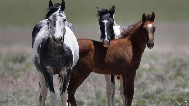 Wild horse_1552933390732.jpg_78004793_ver1.0_640_360_1553015549678.jpg.jpg
