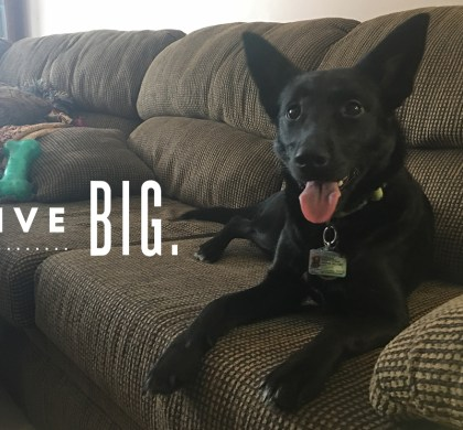 Live Big: Storm's highlights from an amazing 2017! #StormLiveBig #LetsLiveBig #PurinaPetPeople