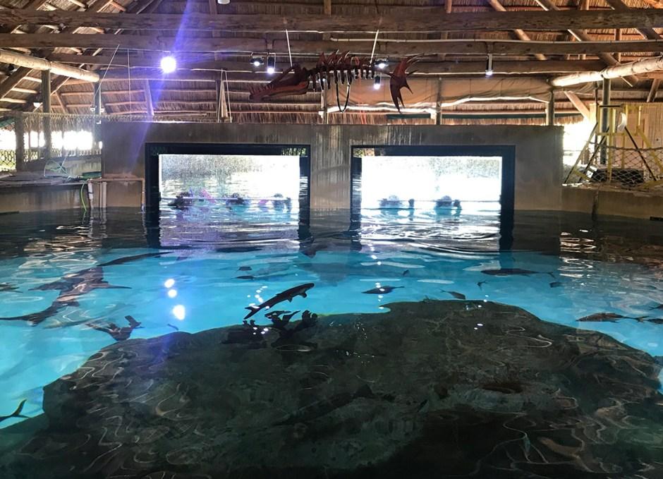 Aquarium Encounters from the shark tank