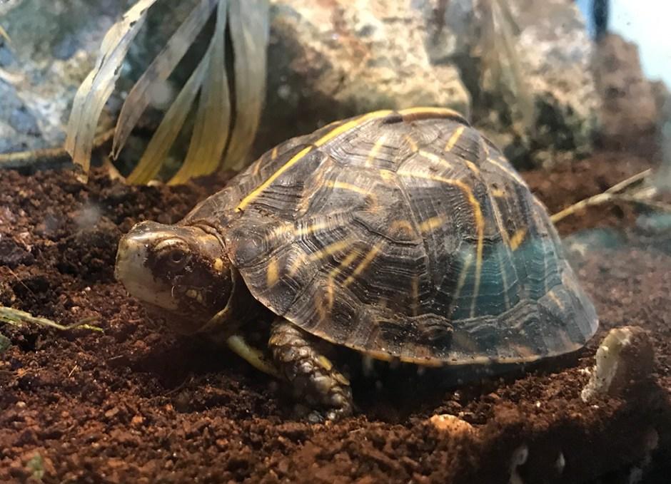 Aquarium Encounters turtle