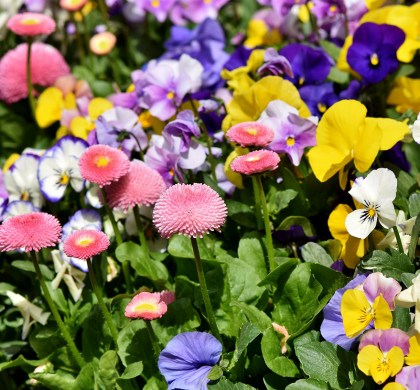 Green Thumb: Top 5 Bedding Plants to Grow In The Winter