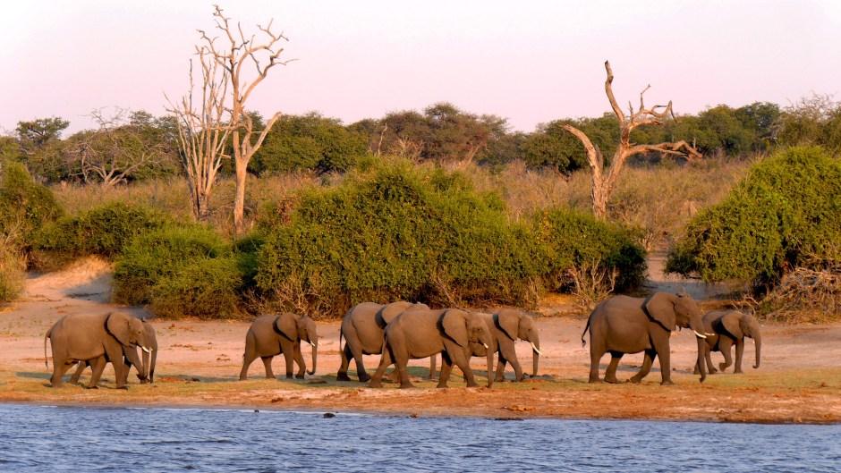 botswana chobe national park africa