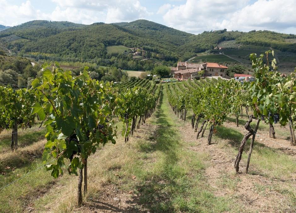 italy winegrowing