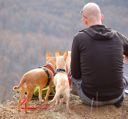 Travelling With Pets: How To Avoid Pet-Related Emergencies