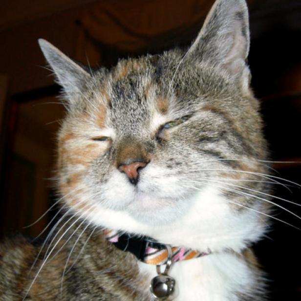 Make A Jingle Bell Cat Collar