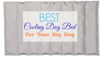 Best Cooling Dog Beds for Your Large Dogs