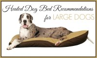 Heated Dog Bed Recommendations for Large Dogs