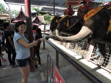 tayland'da fil beslemek