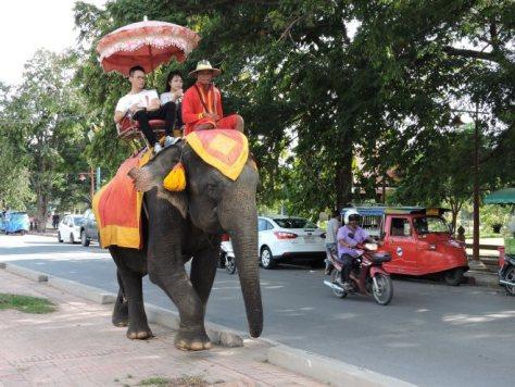 Tayland fili