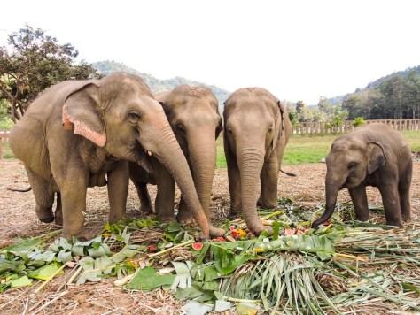 chiang mai fil parkları
