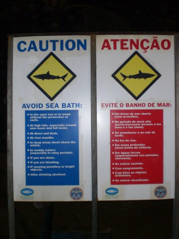 recife köpek balığı saldırısı