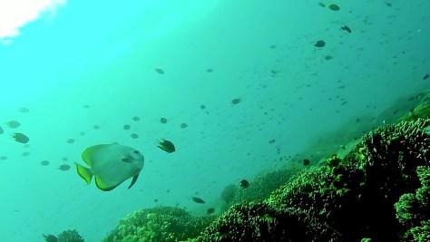 apo island'da dalış