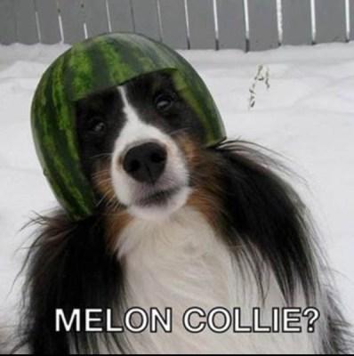Mellon-Collie-copy