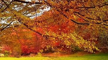 Autumn Sports Trends