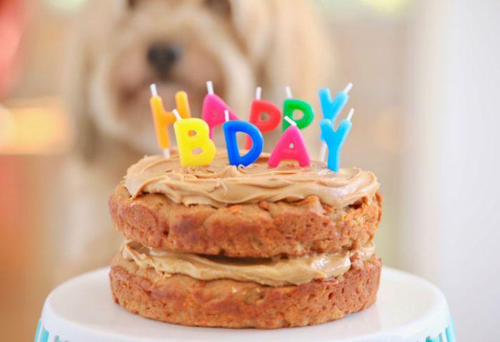 Dog Birthday Cake Recipe For Your Furry Friend Bigger Bolder Baking