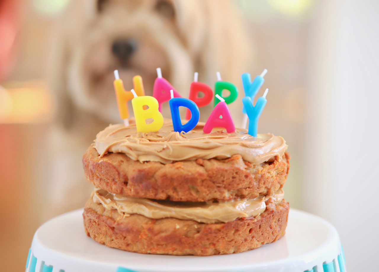 dog birthday cake recipe