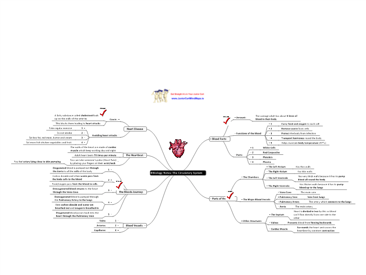 Biology Notes: The Circulatory System: MindGenius mind map