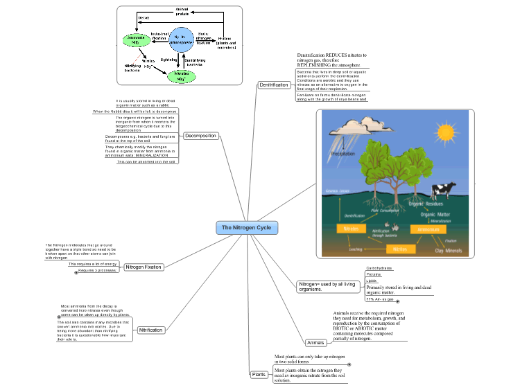 The Nitrogen Cycle mind map   Biggerplate