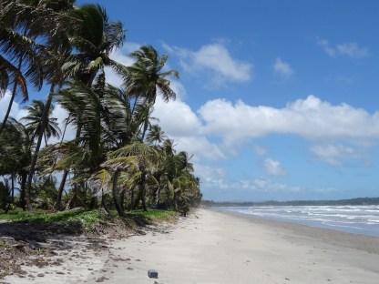 Palmenstrand 2