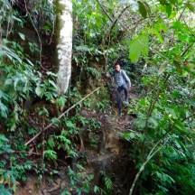 Dschungelpfad
